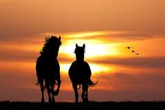 Galopujący konie przy zmierzchem ilustracja wektor