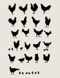 Galos e galinha ilustração royalty free