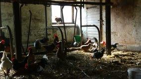 Galos, galinhas e perus na casa de galinha do inverno video estoque
