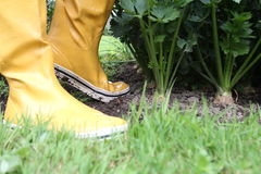 Galoshes in the garden Royalty Free Stock Photos