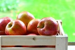 Galowi jabłka Obrazy Royalty Free