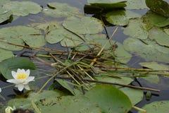 Galowy jeziorny park narodowy Edirne, TÃ ¼ rkiye Zdjęcia Stock