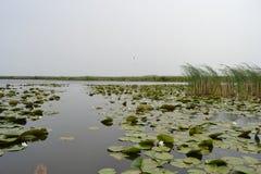 Galowy jeziorny park narodowy Edirne, TÃ ¼ rkiye Zdjęcie Royalty Free