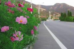 Galsang blomma Fotografering för Bildbyråer