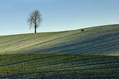 Galt som går till och med snöfältet Royaltyfria Foton