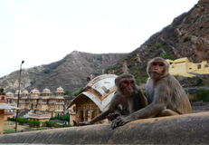 Galtaji,猴子寺庙 斋浦尔 拉贾斯坦 印度 免版税图库摄影