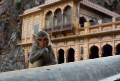 Galtaji,猴子寺庙 斋浦尔 拉贾斯坦 印度 图库摄影