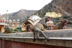 Galtaji, висок обезьяны jaipur Раджастхан Индия стоковое изображение