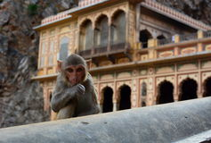 Galtaji Małpia świątynia jaipur Rajasthan indu fotografia stock