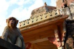 Galtaji, the Monkey temple. Jaipur. Rajasthan. India Royalty Free Stock Photography