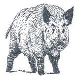 Galtteckning stock illustrationer