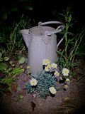Galvanised garden jug. Container, metal, bucket, flower, bed, daisy, dark, ornament, ornamental, old, flowerpot, horticulture, plant, growing, night, light royalty free stock photo