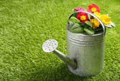 Galvanised metal watering can and flowers. Galvanised metal watering can filled with colourful orange summer flowers standing on a neat green lawn with copyspace stock photo