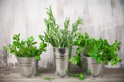 Galvanized bucket with greens Royalty Free Stock Image