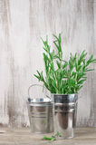 Galvanized bucket with rosemary Stock Images