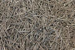 Galvanized nails Stock Photos