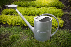 Galvanized watering can on garden bed at sunny day Stock Images
