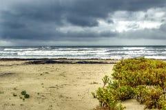 Galveston plaża Obrazy Stock