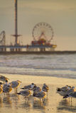 Galveston Pleasure Pier at Dawn Royalty Free Stock Image