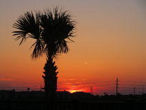 Galveston solnedgång. royaltyfri bild