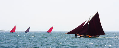Galway hookers at Ocean race. Galway hookers is a traditional fishing boat in the west coast of Ireland Royalty Free Stock Photos