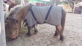 Gamão marrom em ferradura da equitação do celeiro de cavalo fotografia de stock