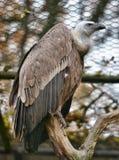 Gam i zoo Fotografering för Bildbyråer