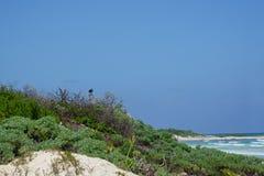 Gam på stranden Royaltyfria Foton
