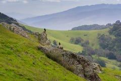 Gam som sitter på en vagga i en dal på en regnig dag, Kalifornien Fotografering för Bildbyråer
