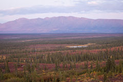 Gama de Alaska en Denali Fotografía de archivo libre de regalías