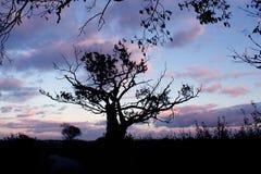 Gama de colores de las naturalezas Fotos de archivo