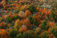 Gama de colores del otoño foto de archivo libre de regalías