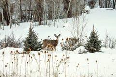 Gama de la nieve Foto de archivo libre de regalías