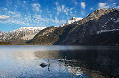 Gama de las montañas con el lago y los cisnes Imagen de archivo