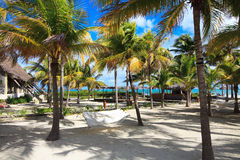 Gamag between the palm trees. Gamag between the palm trees in hotel Melia Cayo Guillermo. Cuba Stock Photography