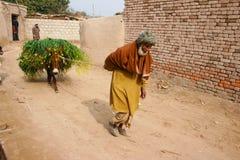Gamal man som drar en åsna Arkivbilder