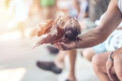 Gamal man som matar duvorna i gatan royaltyfria bilder