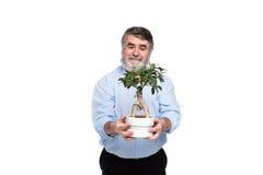 Gamala män med grått hår som har det lilla trädet i händer fotografering för bildbyråer