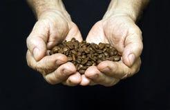 Gamala mannen räcker hållande kaffebönor Arkivbild