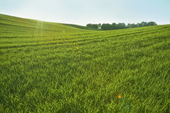 Gamas de la colina verde Imágenes de archivo libres de regalías