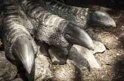 Gamba dell'allosauro del dinosauro Fotografie Stock Libere da Diritti