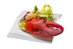 Gamba dell'aragosta con insalata Immagine Stock