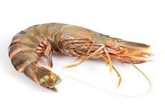 Gambas Royalty Free Stock Images