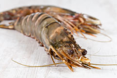 Gambas Stock Photography