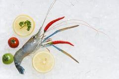 Gambas frescas de los camarones en camarón crudo del hielo con la opinión superior del limón del tomate de los chiles y del perej foto de archivo