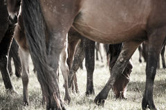 Gambe dei cavalli fotografia stock
