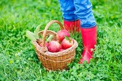 Gambe del bambino negli stivali di pioggia gialli ed in mele rosse Immagini Stock