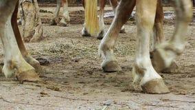 Gambe del cavallo archivi video