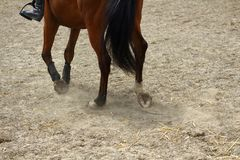 Gambe del cavallo che mostrano i passi sulla sabbia con gli zoccoli immagine stock