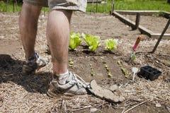 Gambe dell'uomo nel giardino Immagini Stock Libere da Diritti